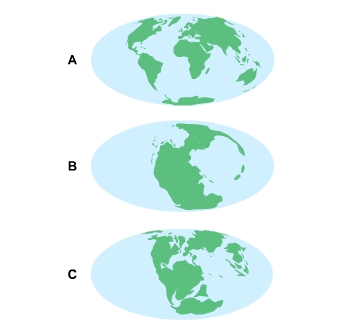 Graphic shows 3 world globes. The first one labeled A, shows all the continents on Earth broken up as to how they appear today. The next globe, labeled B, shows one very large piece of large land where all the continents are connected. Globe C shows the continents drifting away from eachother a little bit.