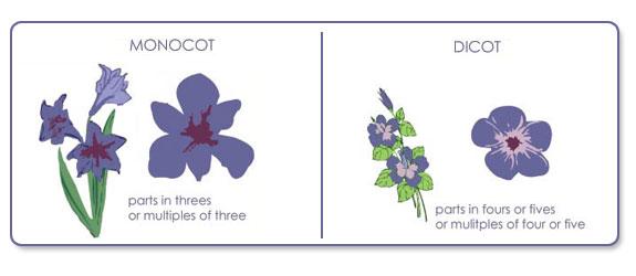 u8_lab_flowers.jpg