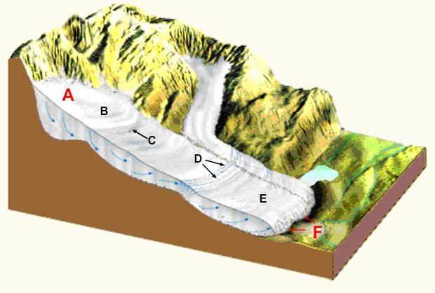 A glacier on a mountain side. The top of the glacier is labeled A, then as you go down hill B is next, C points directly to an area that is a point of equilibrium, D points directly to areas where there are gaps in the snow and ice, E is at the bottom of the glacier, and F points directly to the edge of the glacier at the bottom.